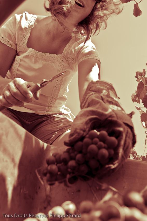 Franois et Pascale Plouzeau sont viticulteurs bio ˆ Razines prs de Richelieu (non loin de Chinon). Tous les ans ils invitent parents et amis ˆ fter les vendanges.